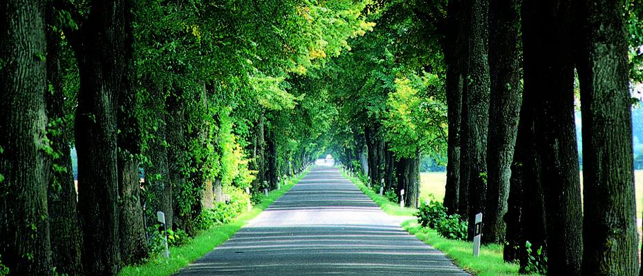 Geispolsheim France  city photos : Angeline Speisser agent commercial à 67118 Geispolsheim, France